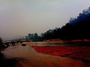magic of colors. Buffaloes crossing the river for grazing...